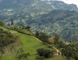 ¿Cómo ha Cambiado la Industria Del Café en Colombia?