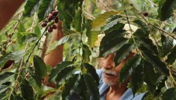 Cultivo Sustentable: Como el Café Especial Puede Traer Empoderamiento a las Personas con Discapacidades