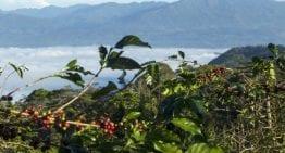 Cómo Los Productores de Especialidad de Indonesia Hacen Frente al Cambio Climático