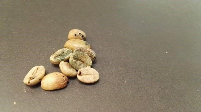 granos de cafe con broca