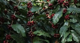 Producer Perspective: How to Farm Specialty Coffee