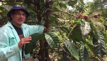 VIDEO: Introducing Liberica, a Lesser-Known Coffee Species