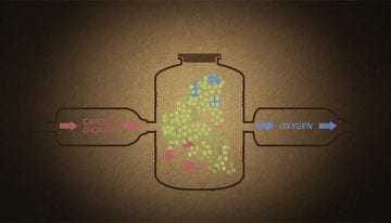 Experimental Processing: 1 VIDEO on Washed Carbonic Maceration