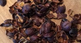 How to Cup Cascara & Evaluate Quality