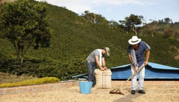 Colombia Has a New Goal: Sustainable Coffee by 2027