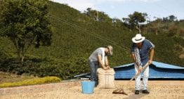 Colombia Tiene una Nueva Meta: Café sostenible para el 2027
