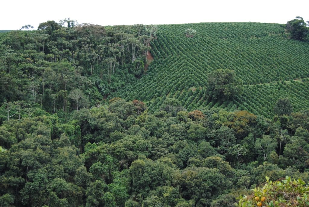 Brazilian coffee farm