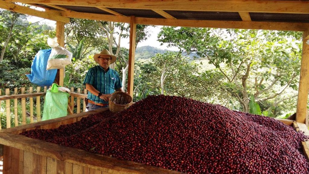 Producer Gonzalo Adán Castillo Moreno with centroamericano coffee cherries