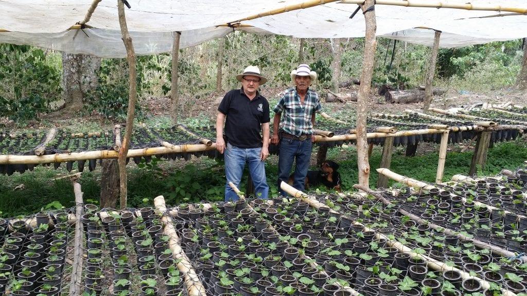Nursery of Centroamericano coffee seedlings