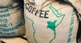 Cómo las Micro-Cooperativas están Transformando el Mercado del Café en Kenia
