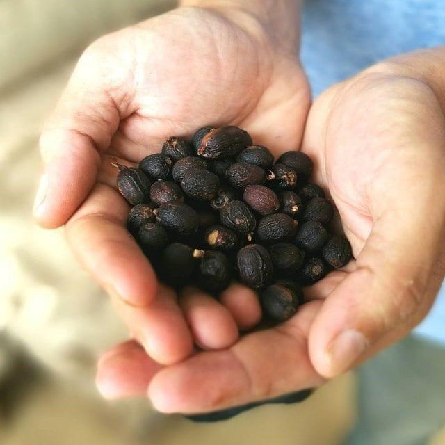 control de calidad en cafes naturales