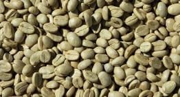 Roaster Basics VIDEO: Why Does Green Bean Moisture Matter?