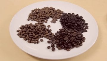 Light, Medium, & Dark Roasted Coffee: What's The Difference?