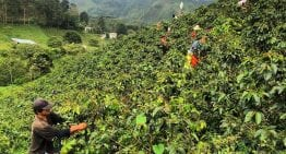 What Are The Main Challenges Faced by Coffee Producers?