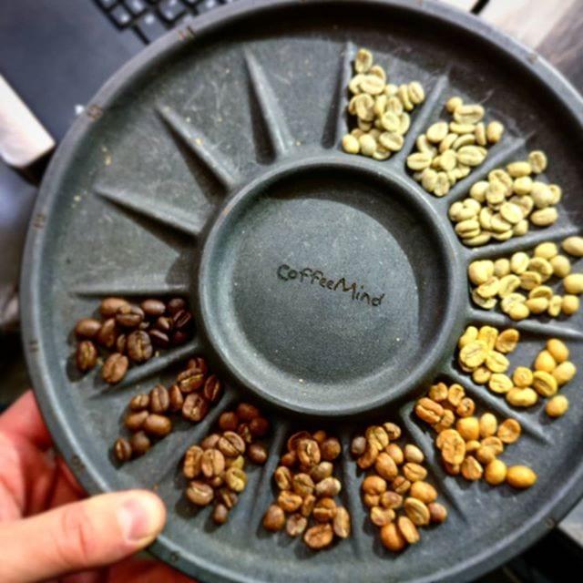 cambios fisicos en el grano del cafe