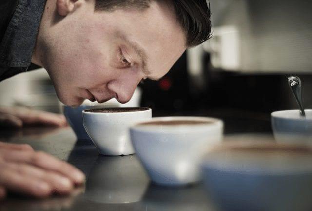 tim wendelboe catando cafe