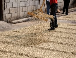 Honduran Cup of Excellence Winning Coffee Goes for US $124.50/lb