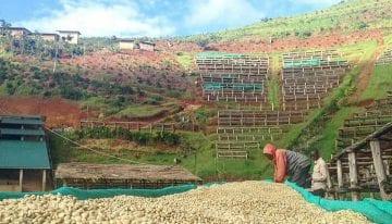 Guía Para Comprar e Importar Café de Burundi