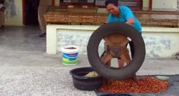 Coffee Processing VIDEO Guide: What Is Pulping?