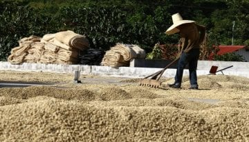 El Café no es El Segundo Producto Más Comercializado (Pero es Importante)