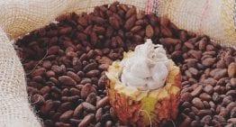 Cómo Evaluar el Cacao y el Chocolate