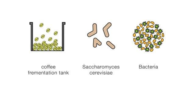 ingredientes para la fermentacion