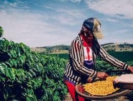 New Film Will Explore Brazil's Specialty Coffee Culture