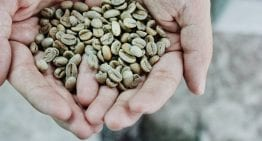 Roaster Guide: Why Is Green Bean Moisture Content Important?