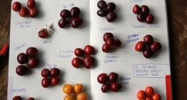 Geisha vs Bourbon: A Crash Course in Coffee Varieties