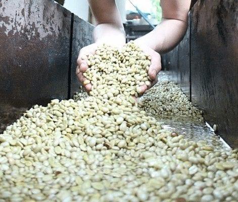 granos de cafe lavado
