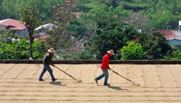 Introducing The 6 Coffee Regions of Honduras