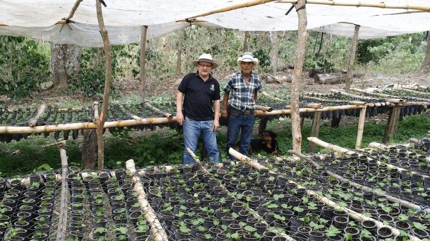 plantula de cafe centroamericano