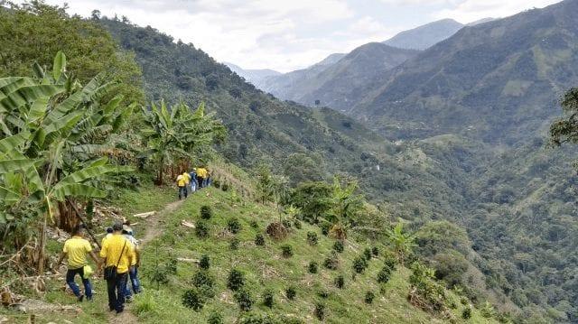 productores de cafe en tolima
