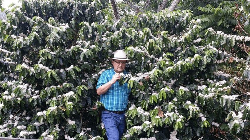 variedad centroamericano