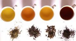 Introducción a la Catación de Té