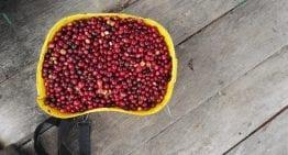 Compra de Café: 5 Consejos para Participar en Subastas en Línea