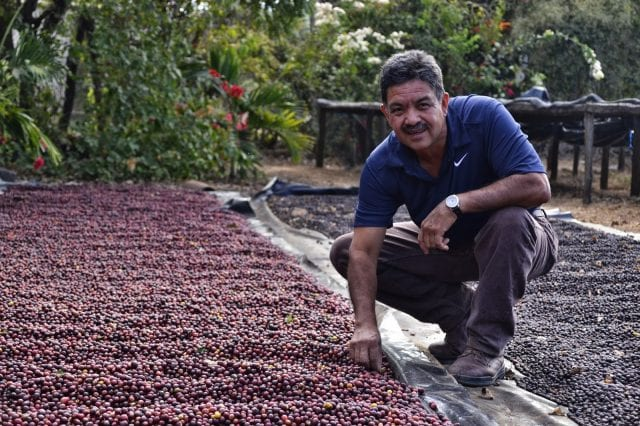 coffee production