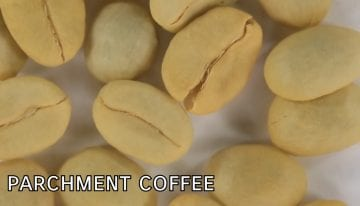 What Is Parchment Coffee? A VIDEO Guide