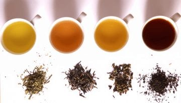 Specialty Tea: An Introduction to Tea Cupping