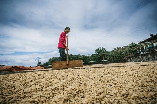 trabajador rastrilla cafe