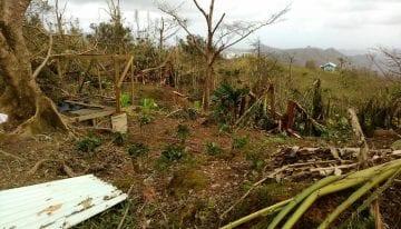 Puerto Rico's Coffee Industry: 6 Weeks On