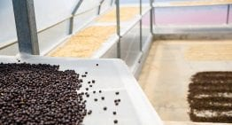 How to Roast Natural & Honey Processed Coffee