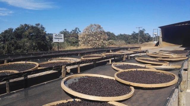 cafe natural en brasil