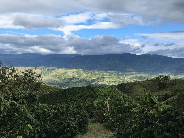 finca de cafe en huila colombia