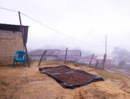 Creating Schools & Jobs in Honduras' Coffee-Farming Communities