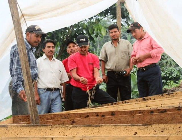 productores de cafe en guatemala