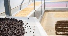 Cómo Tostar Cafés Naturales y Honeys