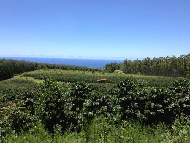 Finca cafetera en Hawaii