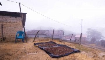 Creando Escuelas y Trabajos en las Comunidades de Caficultores de Honduras