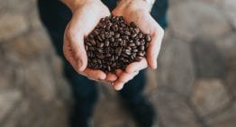 What Roasters Need to Know About Decaf Coffee